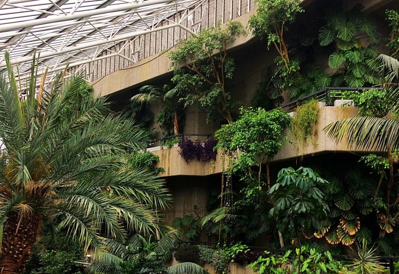 The interior of the barbican conservatory